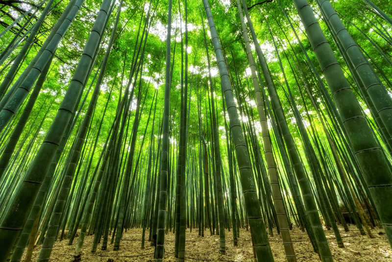 Why is Bamboo Eco-Friendly?