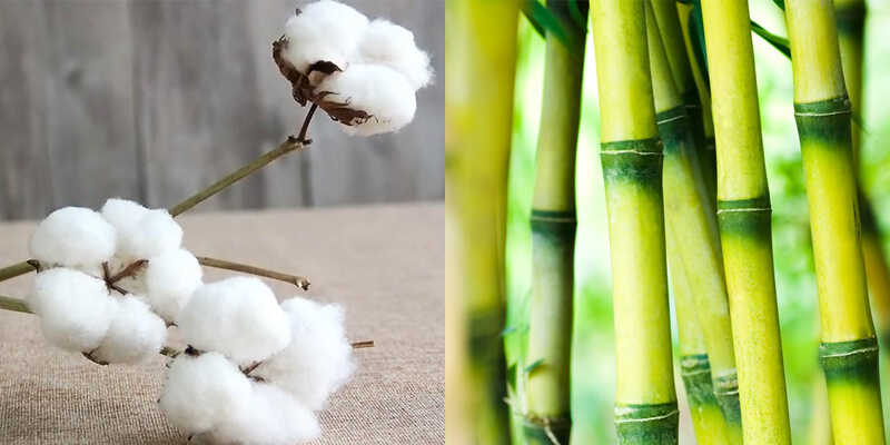 Is bamboo more eco-friendly than cotton?