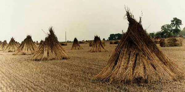 Hemp-Production-Is-Less-Harmful-To-Environment