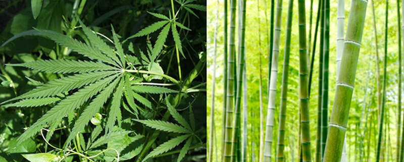 Is Hemp or Bamboo Clothing More Sustainable?