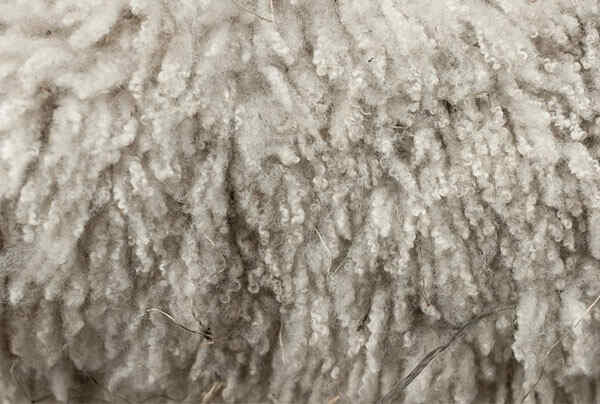 Is-Wool-Eco-Friendly-Fabric