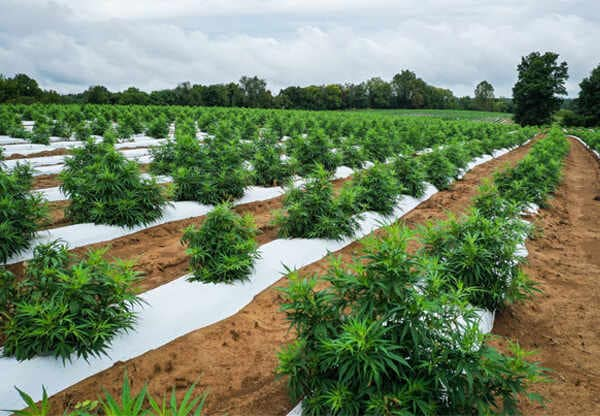 Top-Reasons-Why-Hemp-Clothing-Is-Eco-Friendly